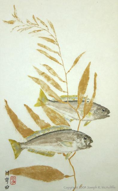 Ocean Whitefish and Kelp - photo#28