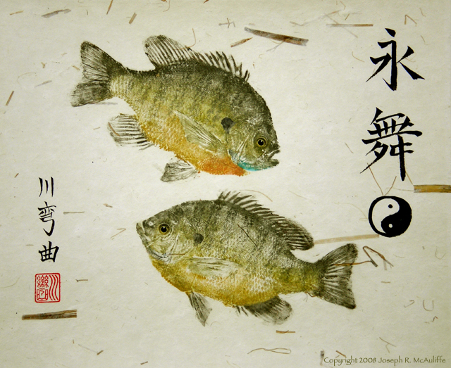 every spring spawning bluegill sunfish perform the eternal dance of yin and yang the male creates a dish shaped nest in shallow water by sweeping away